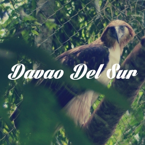 A Philippine Eagle in captivity. Calilan. (August 2013)