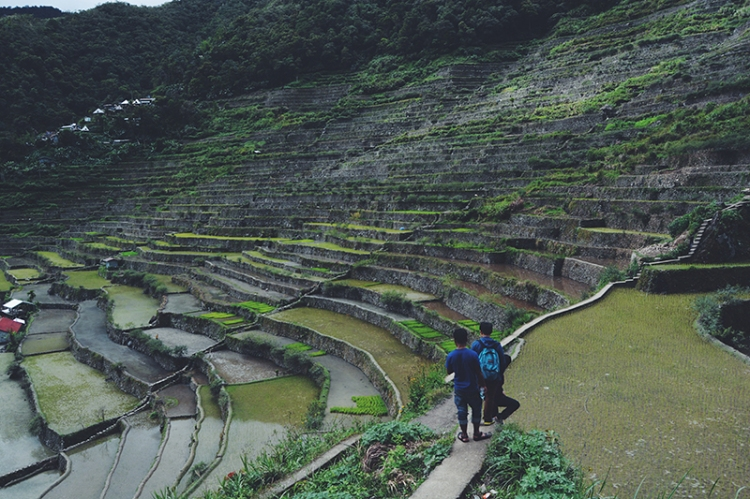 The intricate rice fields feature a complex irrigation system that draws water from the mountains.